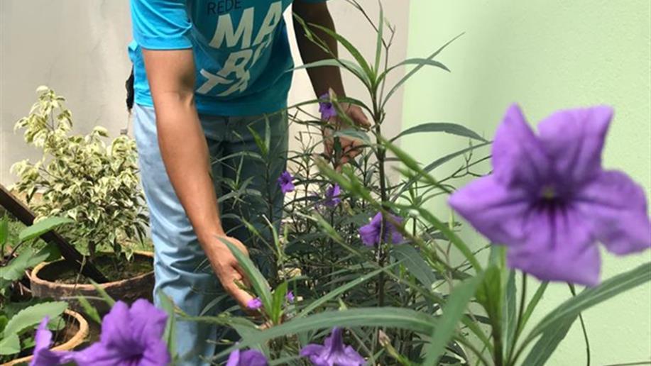 Restauração dos Ecossistemas é tema do Dia Mundial do Meio Ambiente